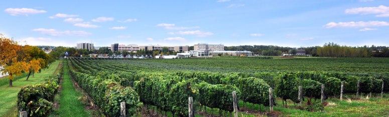 NOTL-Campus-Vineyard-View